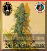 Big Buddha cheese feminized Skunk seeds Worldwide Del